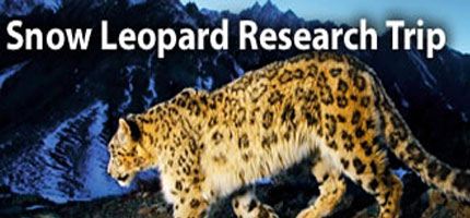 Snow Leopard Research Trip
