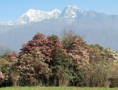 Pikey Peak is one of the tallest Hills in Solukhumbu Region and is one of the newly opened trekking destinations.